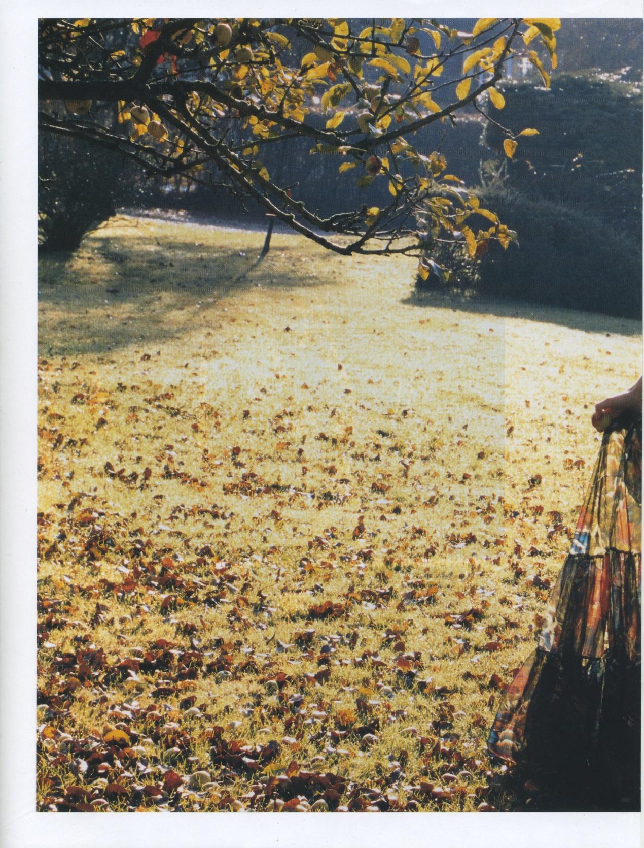woodscan344.jpg